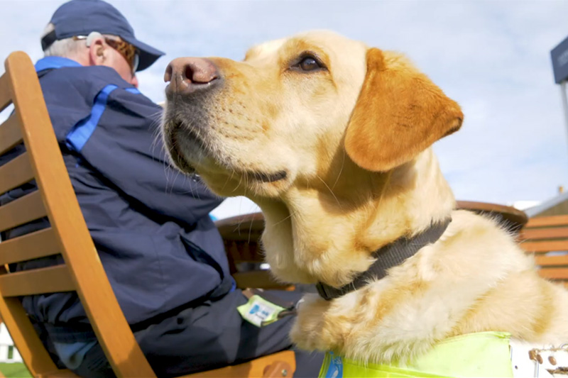 Dogs of Dunhill... our four legged friends have been out in force at this year's tournament